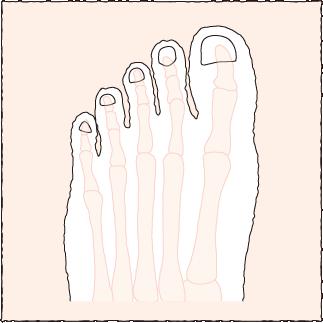 問題ない正常な脚